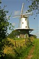 Windmill -DE KOE-  (the cow)