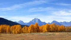 Ox Bow Aspen