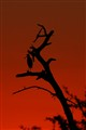 Etosha Pan sunset