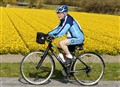 Cycling with daffodils