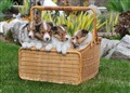 A basket full