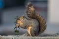 Squirrel Munching-5278