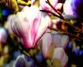1-magnolia time