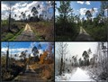 4 Jahreszeiten / 4 seasons