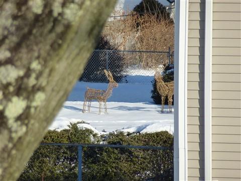 Panasonic ZS 15: The Deer are 100 yards away !! : 5+