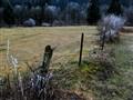 abandoned pasture