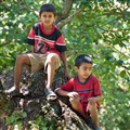 Nepali Boys Sitting on a Tree