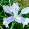 Fuji flowers (6)
