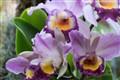 Flower--Garden--1--------0002 copy