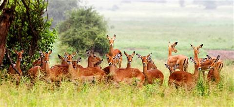 Impala group_1b