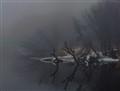 foggy river..