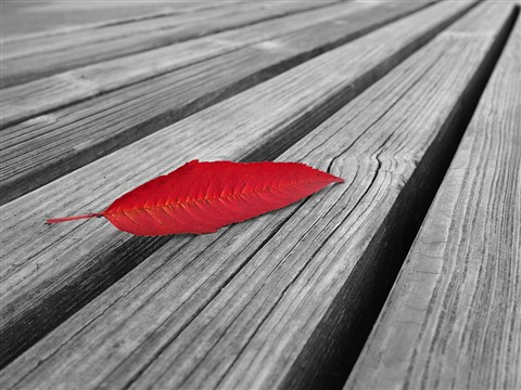Red_Leaf_bw_small