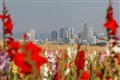 Frankfurt Skyline framed in gladiolo flowers