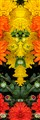 Mum Kaleidoscope detail 2