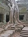 Ta Prohm temple, Angkor complex, Cambodia