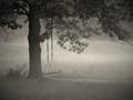 Swing in Morning Fog