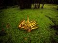 Fern Leaf in Swamp