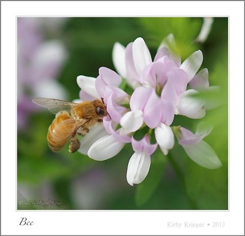 2013-06-17_KirbyKrieger_Bees_4 of 4