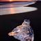 m Glacier Beach Sunset 16-12-2011 16