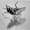 deadfly2BW (1 of 1)