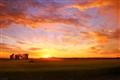 Sunset over farm