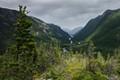 Boreal forest : Parc National des hautes Gorges de la Rivière Malbaie
