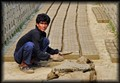 Brickmaking in Bangladesh