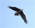 eaglefood