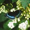 Butterfly0159-2