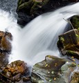 Rapid in the Hermitage Scotland