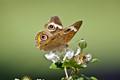 butterfly mar 2012 2