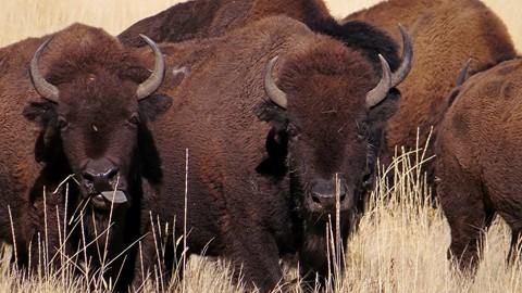 2103-11-17 Antelope Isaland 122