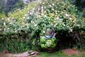 Hornby Island Old Garden