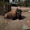Lumix S Pro 501.4_bison-1