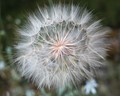 Wind Seeds