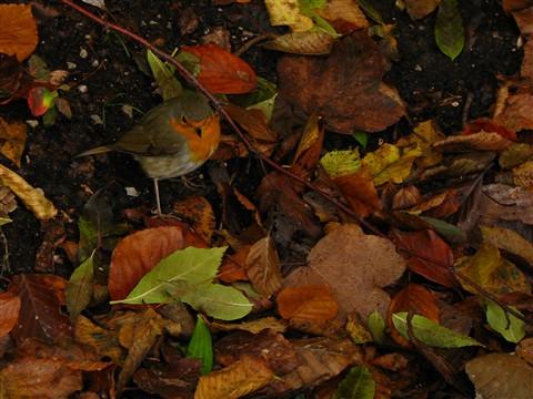 IMG_7163 Amongst The Leaf