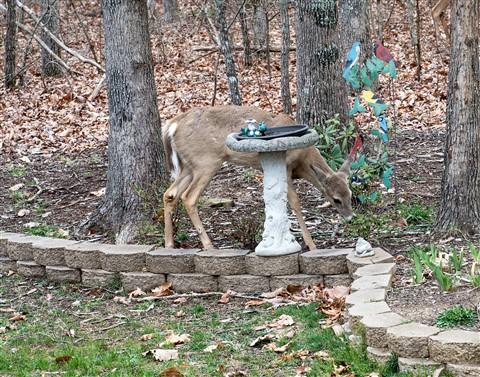 deer_90mm-2