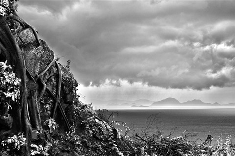 samui-island-view-sea-tree-cliff-black-and-white