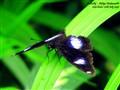 Butterfly_aditya