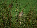 April Sparrow