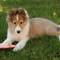 Frisbie Pup