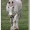 horses_0170h