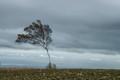 An Early Winter Blown Tree
