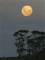 Moonrise over Maria Island