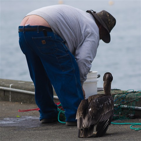 The fisherman and the Pelican