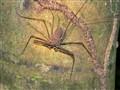 Spider in Amazon Jungle