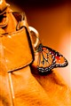 butterfly on the bag (1 of 1)