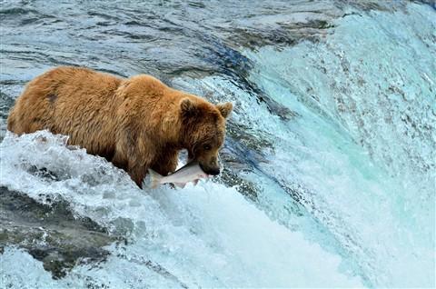 Alaska2012_D192_eds