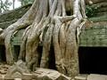 Roots at Ta Prohm, Cambodia