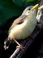 38_Bird_IMG_3860